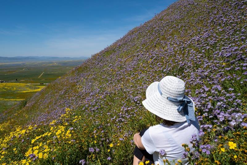 La giovane donna si siede in un campo dei wildflowers porpora su un pendio di collina ripido, guardante fuori al bello paesaggio  immagine stock