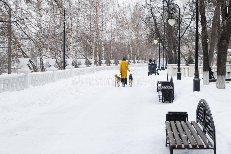 La giovane donna sta camminando in un parco nevoso dell'inverno con i suoi due cani Vista posteriore fotografia stock libera da diritti