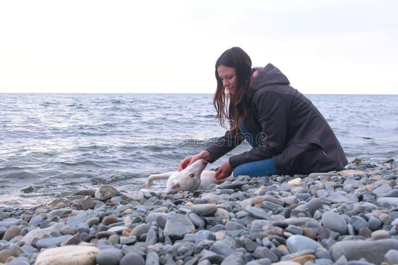 La giovane donna sta sedendosi sulla spiaggia di pietra dal mare con il suo cane bianco fotografie stock
