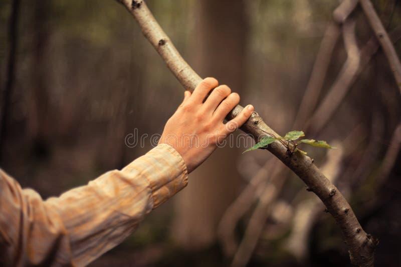 La giovane donna sta toccando un ramo di albero immagine stock