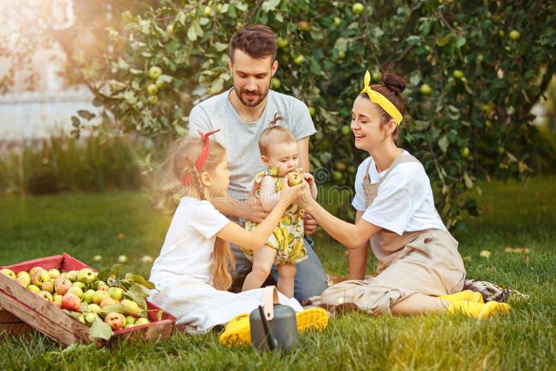La giovane famiglia felice durante le mele di raccolto in un giardino all'aperto immagini stock