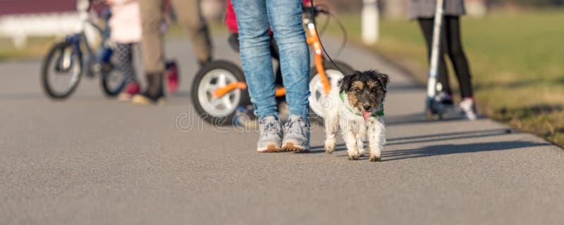 La giovane famiglia va a fare una passeggiata con i loro bambini e guinzagli con il loro piccolo cane sveglio di Jack Russell Ter immagini stock