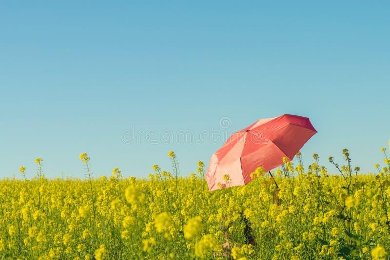 La giovane femmina nuda con l'ombrello rosso nel campo con giallo fiorisce la o immagini stock