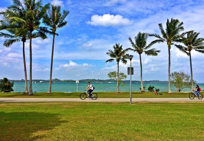 La giovane guida delle coppie va in bicicletta ad un parco della spiaggia fotografia stock libera da diritti
