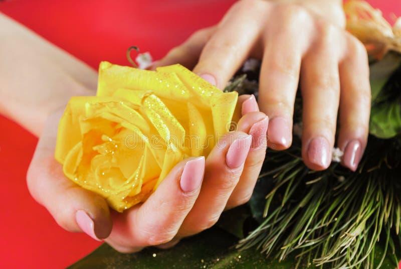 La giovane mano femminile con i chiodi beige colora la tenuta della rosa di giallo immagini stock libere da diritti
