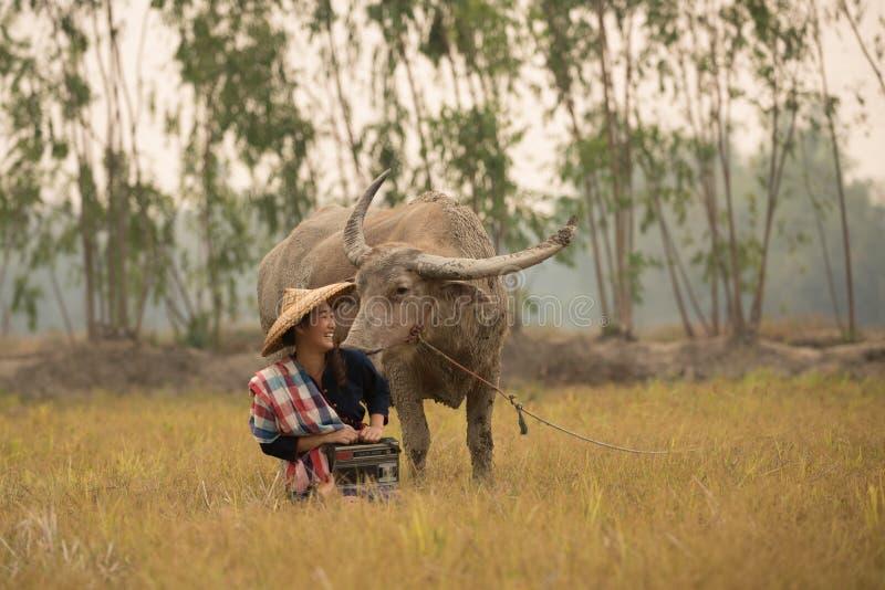 La giovane signora asiatica si siede accanto al bufalo e tiene la radio immagini stock