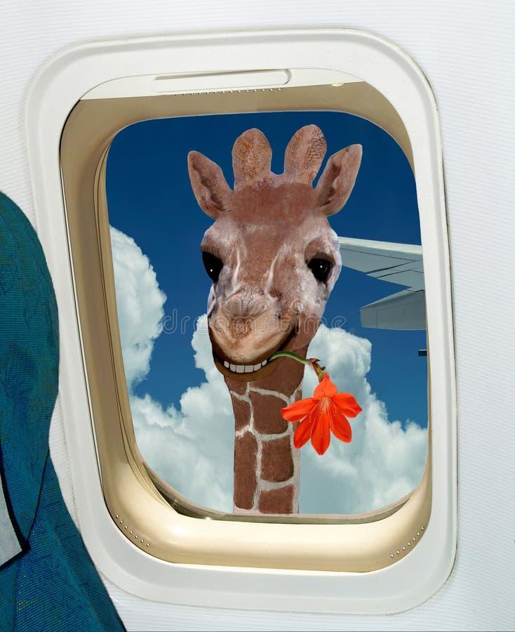 La giraffe accueille à stupéfier l'Afrique ! illustration de vecteur