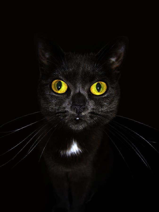 La Gitana o gato mim fotos de stock royalty free