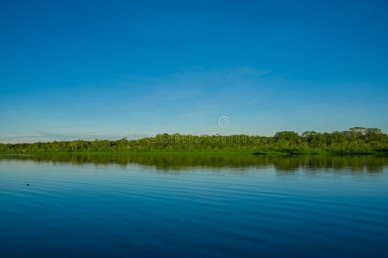La giungla ha riflesso in un lago nel parco nazionale di Limoncocha nella foresta pluviale di Amazon nell'Ecuador immagine stock libera da diritti