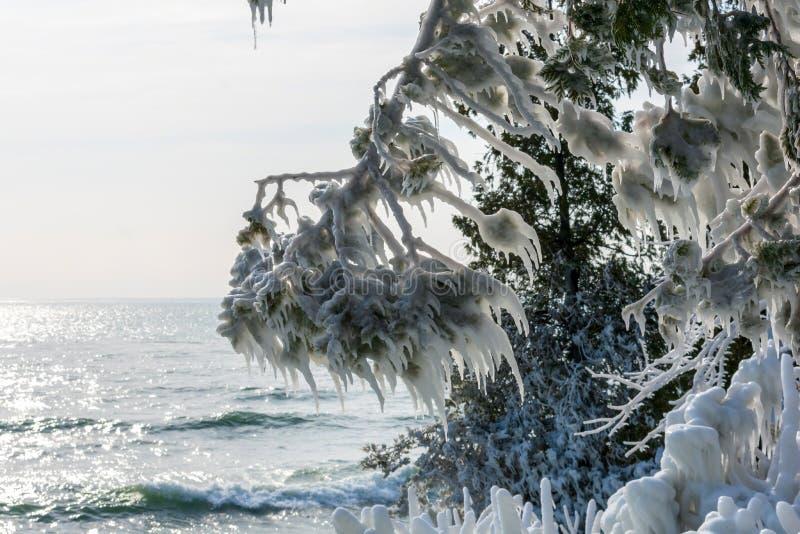 La glace a couvert des arbres le long d'au bord du lac photos stock