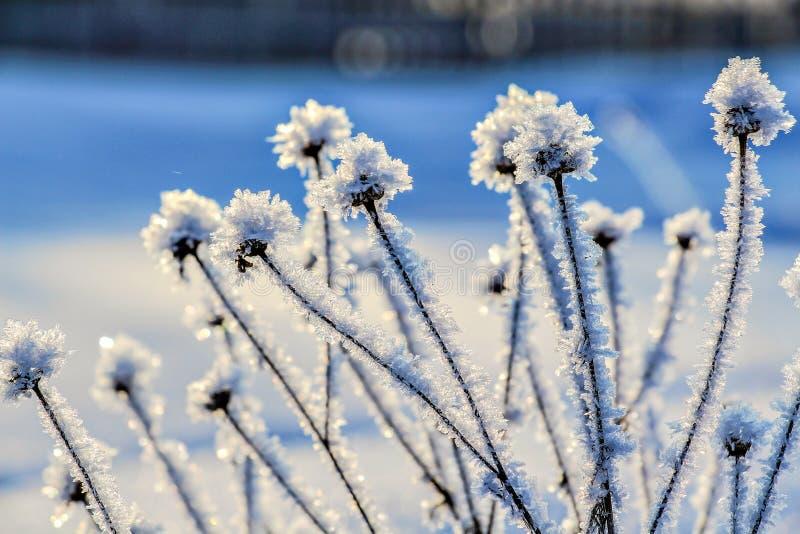 La glace a couvert des wildflowers sur un fond brouillé image libre de droits