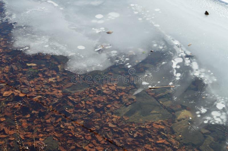 La glace et sèchent des feuilles photos stock