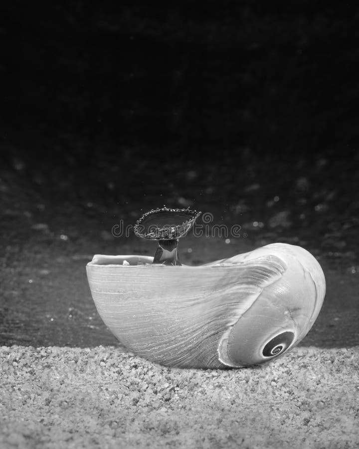 La goccia di acqua spruzza per creare le forme in una conchiglia immagini stock