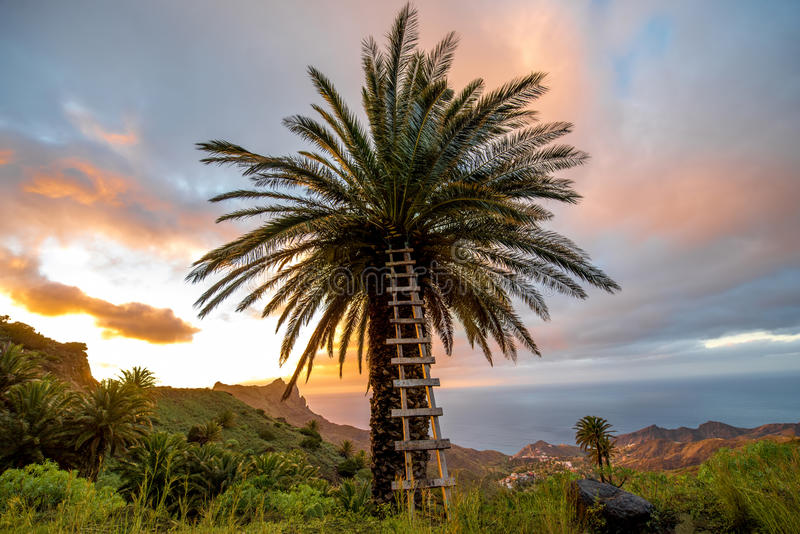 La Gomera island lanscape view. Beautiful landscape view with palm tree on the western part of La Gomera island on the sunset royalty free stock photography
