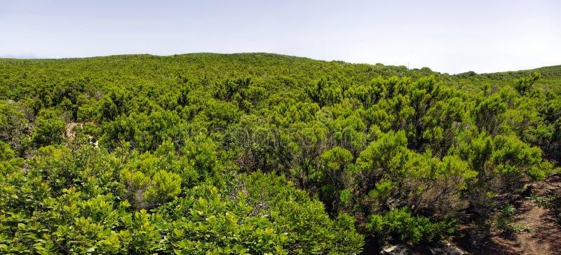 La Gomera. Mirador de Alojera, Canary royalty free stock photography