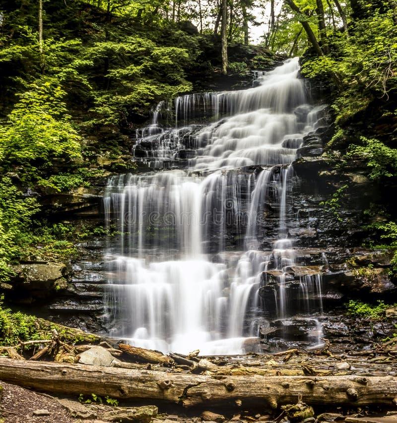 La gorge de Ricketts héberge la région naturelle de gorges photos libres de droits