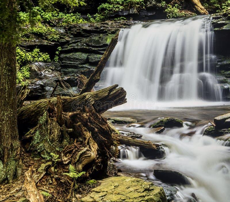 La gorge de Ricketts héberge la région naturelle de gorges images libres de droits