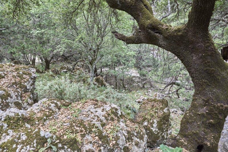 La Grèce crète La gorge d'Imbros photos stock
