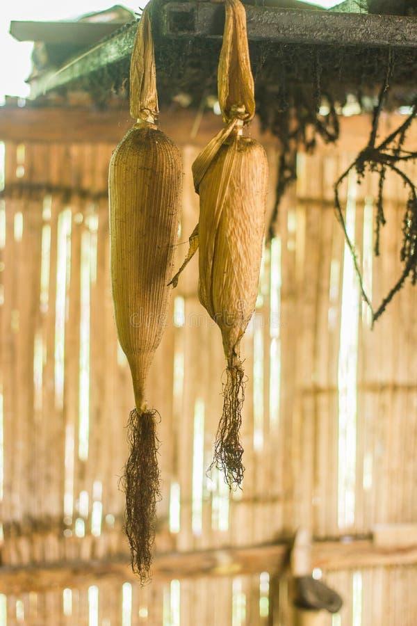 Download La graine de maïs image stock. Image du mangez, personne - 45367981