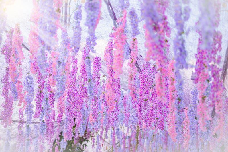 La gran flor de la glicinia fotos de archivo