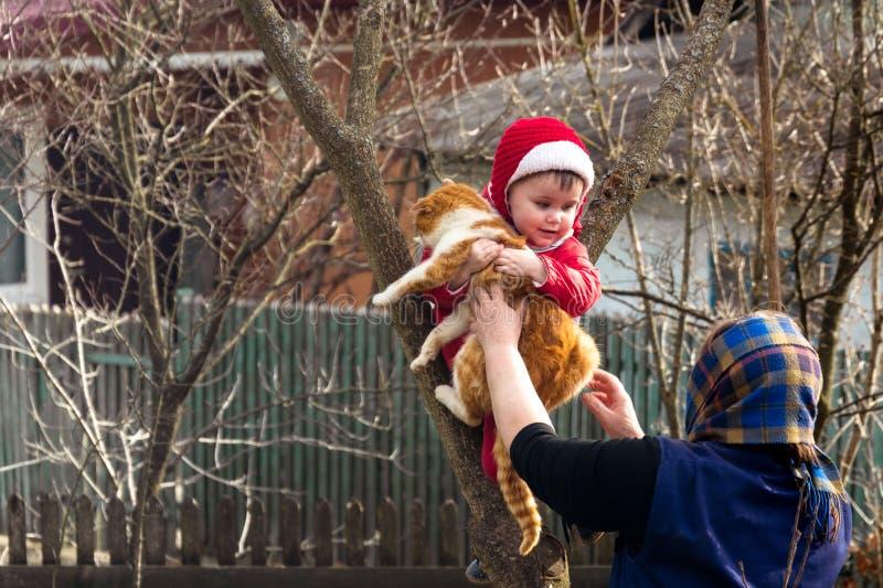 La grand-mère rurale donne dans les mains d'un chat un enfant qui a grimpé à un arbre images stock