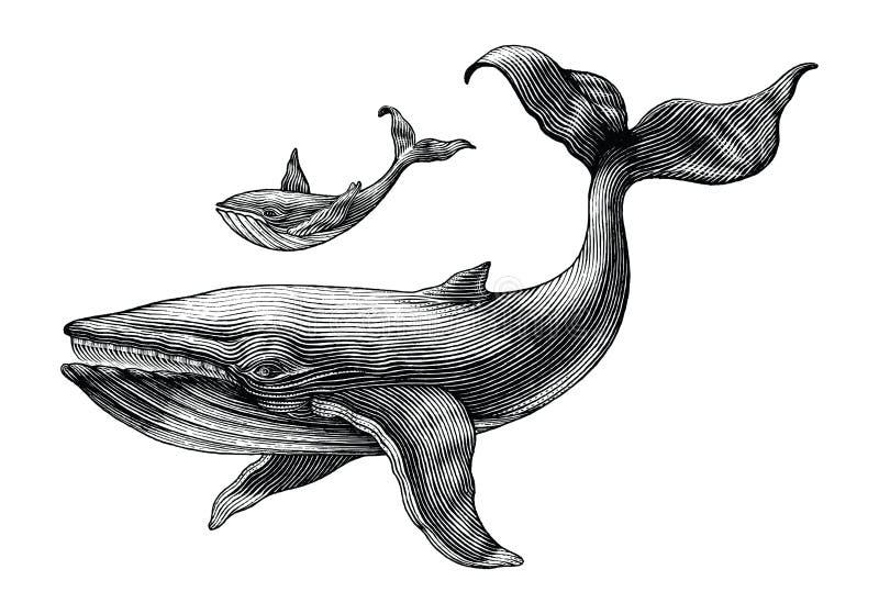 La grande balena e la piccola balena passano a disegno il illust d'annata dell'incisione illustrazione di stock