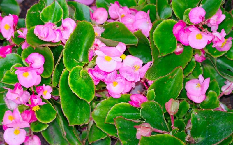 La grande fleur photos stock