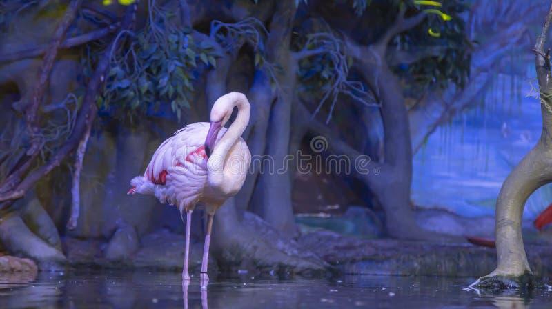 La grande image d'un flamant rose sur la nature images stock
