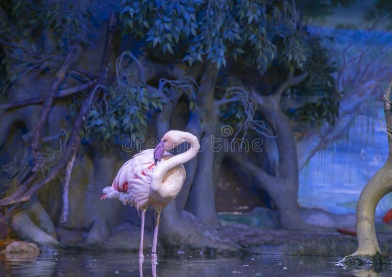 La grande image d'un flamant rose sur la nature photo stock