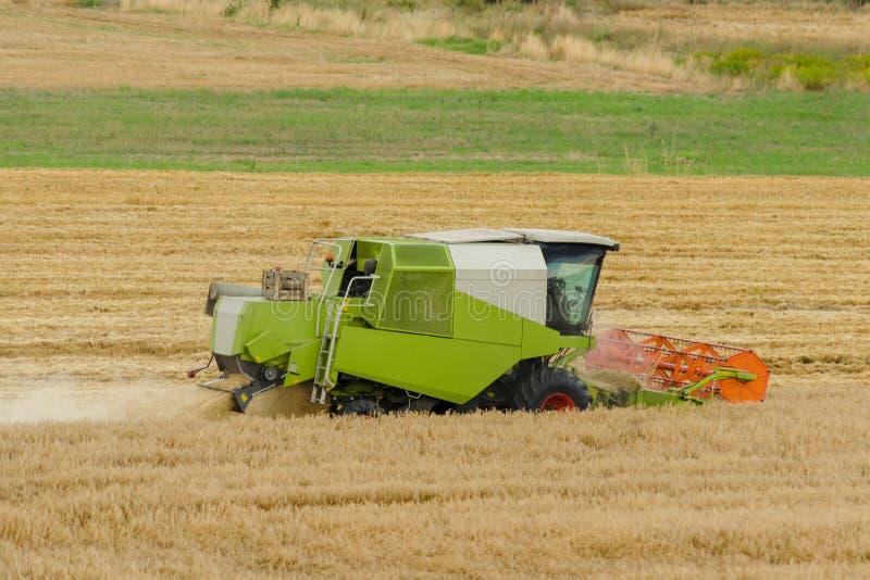 La grande machine verte de moissonneuse de cartel fonctionnant dans un domaine d'or de blé, fauche l'herbe dans le domaine d'été  image stock