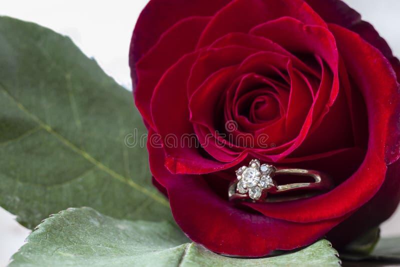 La grande rose de rouge avec une bague à diamant a collé dans le pétale photos stock