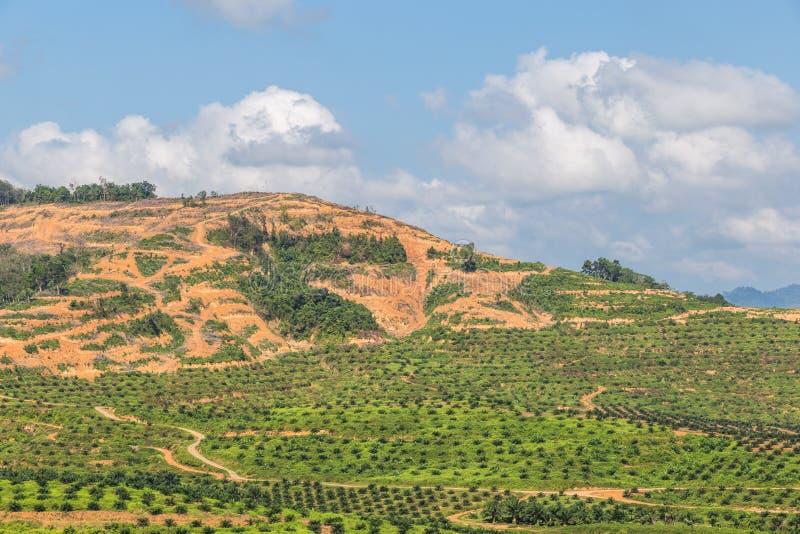 La grande zona di montagna è taglio dell'albero per coltiva le piantagioni della palma da olio, disboscamento fotografia stock libera da diritti