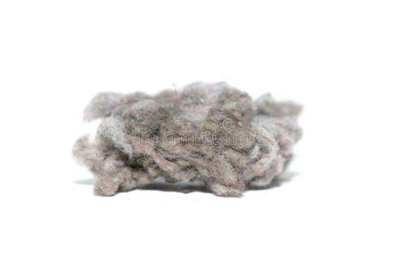La grands poussière et cheveux image stock