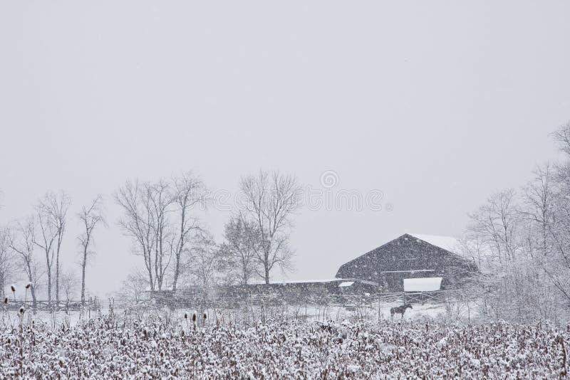 la grange a couvert le cheval près de la neige images stock