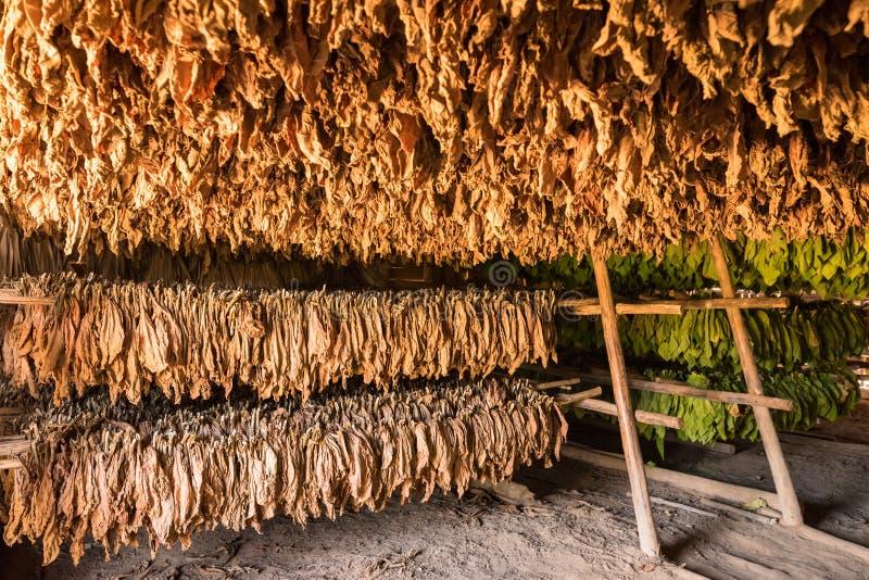 La grange pour le tabac de séchage part dans la vallée de Vinales dans Cubaa photos stock