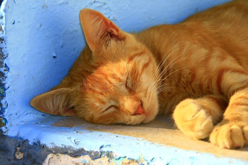 La Grecia, gatto esterno immagini stock libere da diritti