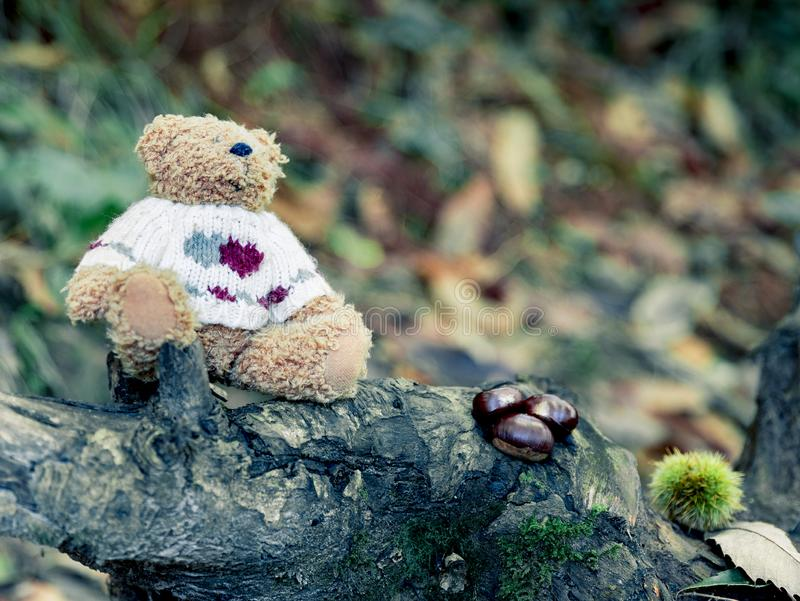 Teddy bear taking an autumn walk through the forest royalty free stock photo
