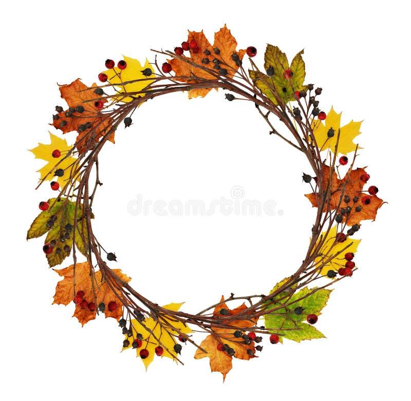 La guirlande ronde des brindilles, des baies et de l'érable secs d'automne part images libres de droits