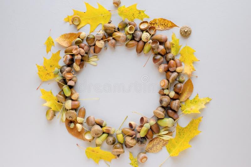 La guirnalda hermosa hecha de bellotas y de diverso otoño clasificado se va en un fondo purpúreo claro foto de archivo