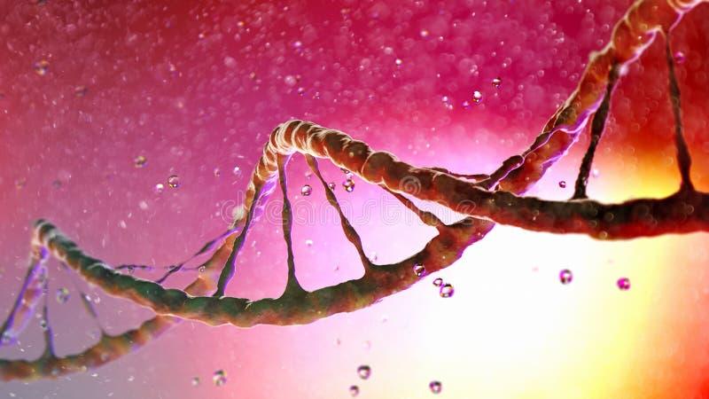 La hélice de la DNA, ácido desoxirribonucléico es a hilo-como la cadena de los nucleótidos que llevan las instrucciones genéticas libre illustration