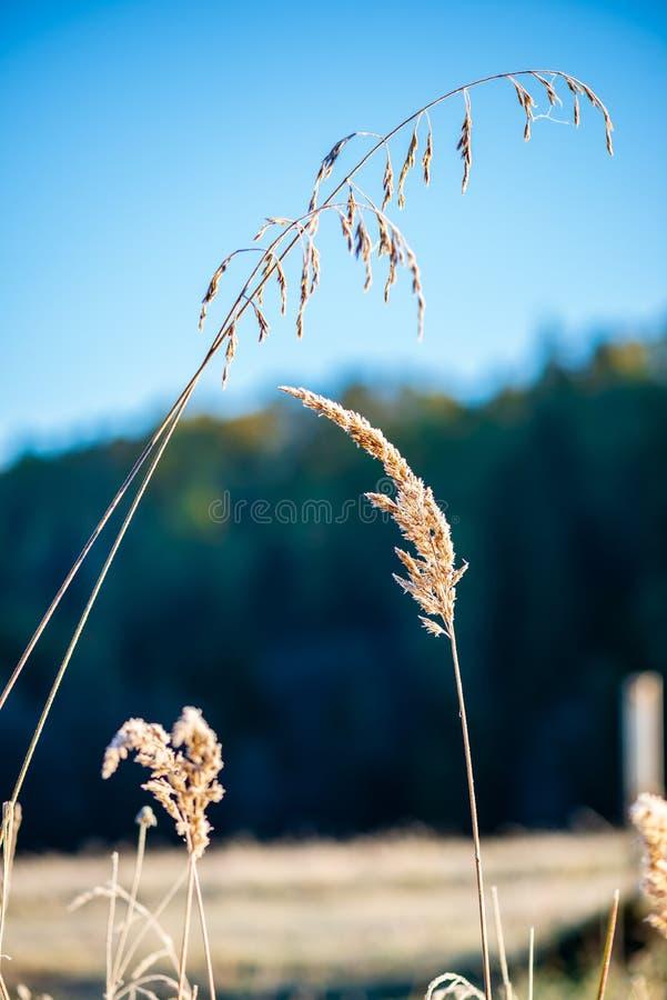 la helada cubri? las hojas de la hierba y del ?rbol en luz soleada de la ma?ana del invierno fotos de archivo