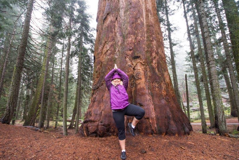 La hembra adulta 20s hace una actitud de la mediación de la yoga delante de un árbol de la secoya gigante imagen de archivo