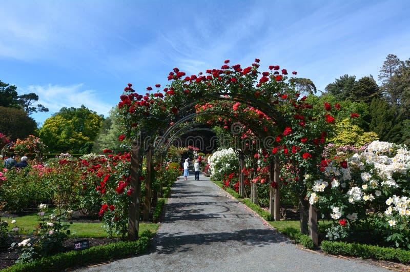 La herencia Rose Garden en los jardines botánicos de Christchurch, nuevo Ze foto de archivo