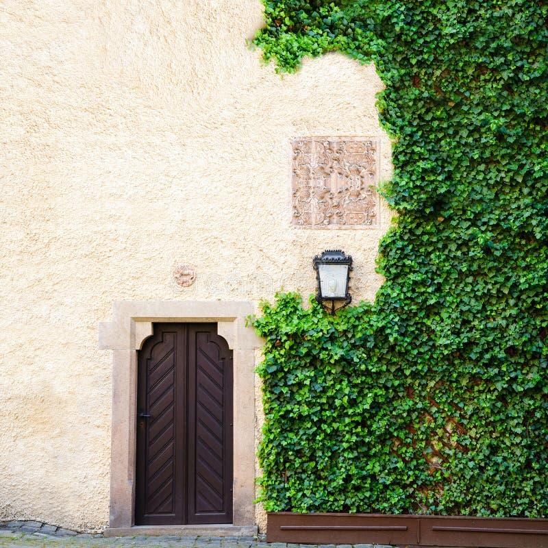 La hiedra verde cubre el lado del fondo resistido del granero con la puerta vieja foto de archivo