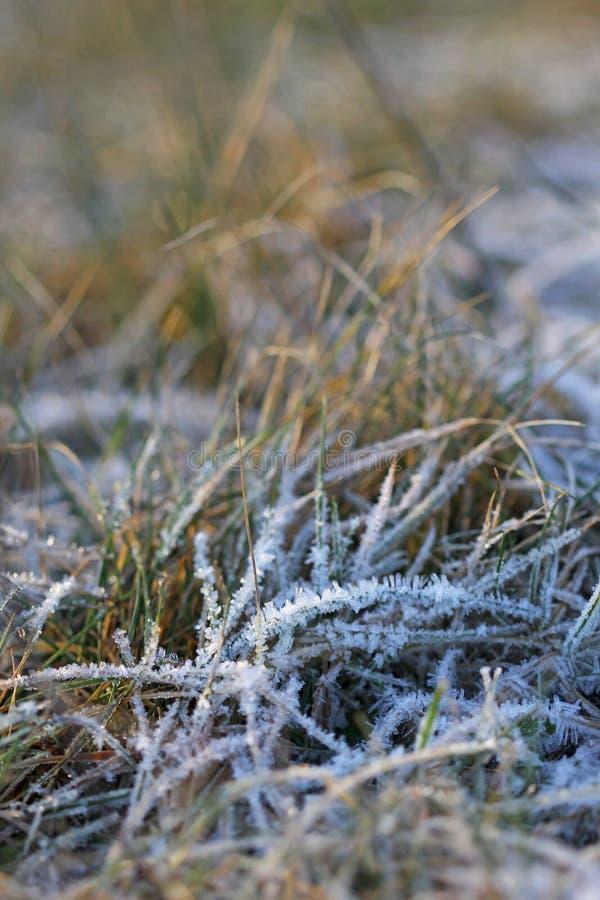 La hierba acodó con los cristales de hielo en invierno fotografía de archivo libre de regalías