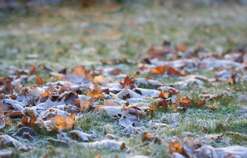 La hierba acodó con los cristales de hielo en invierno imagenes de archivo