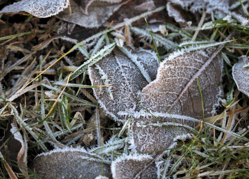 La hierba acodó con los cristales de hielo en invierno fotos de archivo