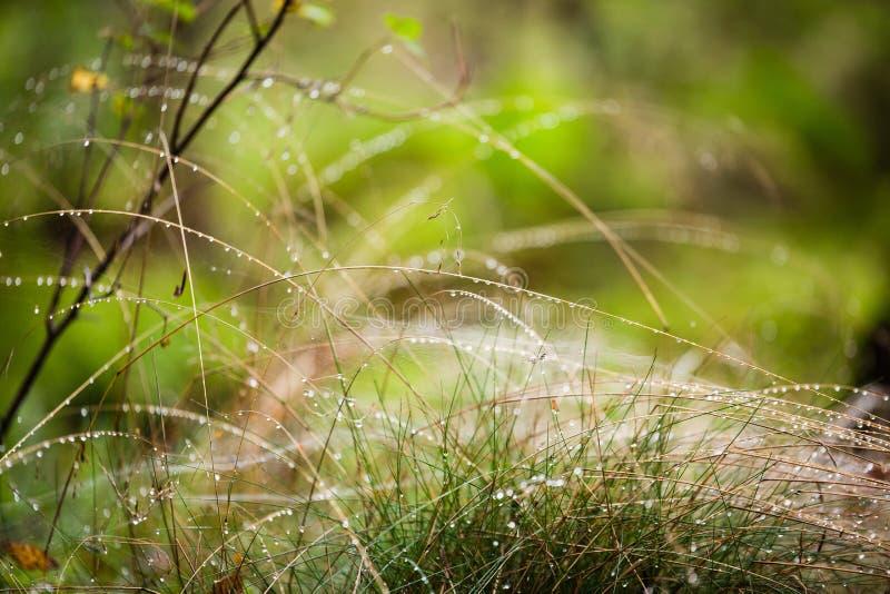 La hierba con descensos de rocío se cierra para arriba fotos de archivo