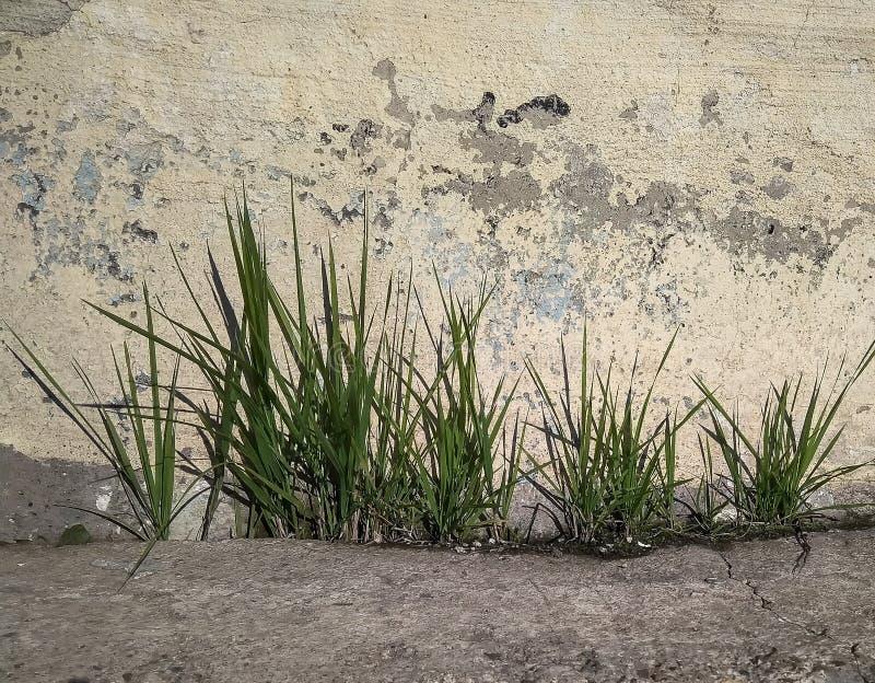 La hierba crece en fila en el cemento imagenes de archivo