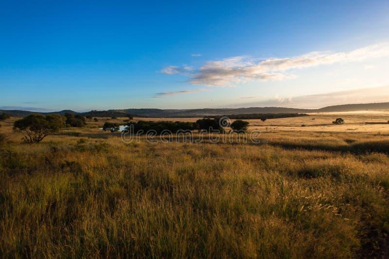La hierba de la fauna aclara salida del sol del amanecer fotografía de archivo